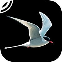 Collins Bird Guide – The Ultimate Field Guide for Britain & Europe