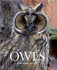 Owls, by Marianne Taylor