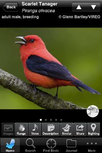 Scarlet Tanager species account from the Audubon Birds iPhone app