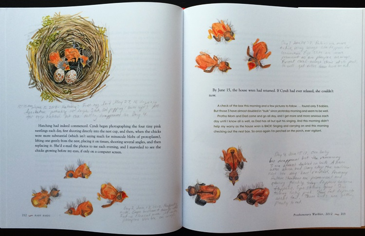 Prothonotary Warbler nestlings from Baby Birds: An Artist Looks into the Nest