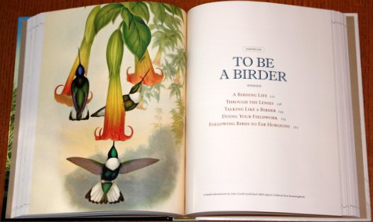 Sample from National Geographic Bird-watcher's Bible: A Complete Treasury