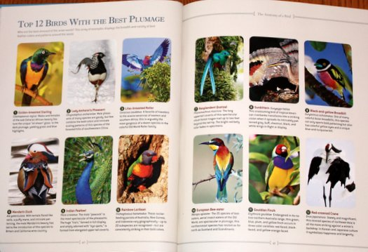 Top 12 Birds with the Best Plumage, according to National Geographic Bird-watcher's Bible: A Complete Treasury
