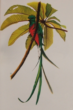 Resplendent Quetzal, by H. Douglas Pratt in Birding on Borrowed Time