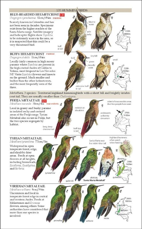 Sample from Field Guide to the Birds of Colombia: Second Edition