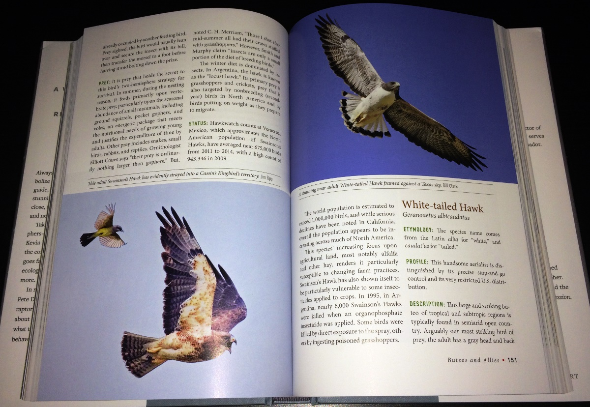 Review Birds Of Prey Hawks Eagles Falcons And Vultures Of North America