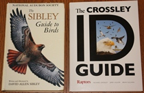 comparison front view of The Crossley ID Guide: Raptors