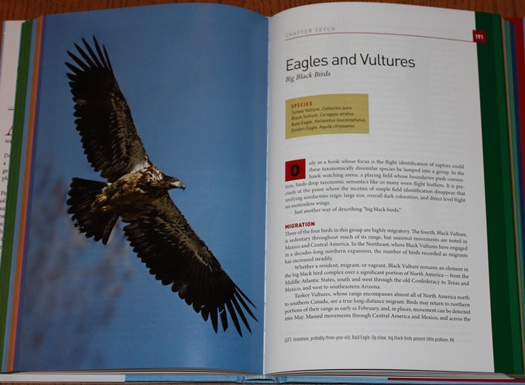 Eagles and Vultures chapter from Hawks in Flight: Second Edition