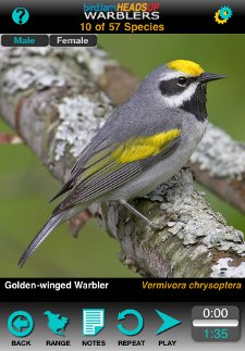 Golden-winged Warbler from HeadsUp Warblers iPhone app