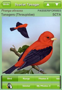 Scarlet Tanager species account from the iBird iPhone app