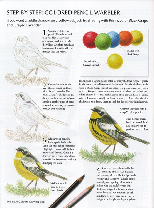 Sample from The Laws Guide to Drawing Birds