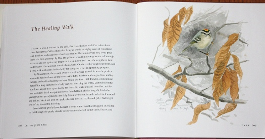 Golden-crowned Kinglet painting from Letters From Eden: A Year at Home, in the Woods