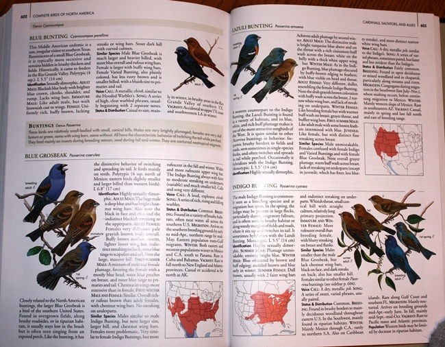 Sample from National Geographic Complete Birds of North America, 1st Edition
