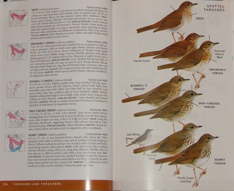 review peterson field guide to birds of north america rh birderslibrary com peterson field guide to birds of eastern and central north america peterson's field guide to edible wild plants pdf