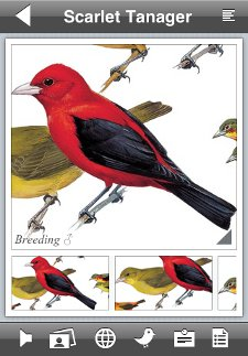Scarlet Tanager species account from the Peterson Birds of North America iPhone app
