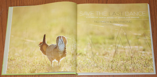 Title page from Save the Last Dance: A Story of North American Grassland Grouse