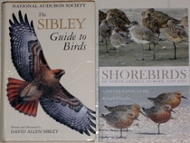comparison front view of Shorebirds of North America, Europe, and Asia: A Photographic Guide