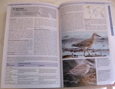 sample pages from Shorebirds of North America, Europe, and Asia: A Photographic Guide