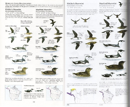 Comparison of murrelet plate between The Sibley Guide to Birds first and second editions