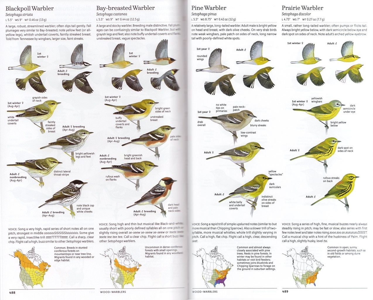 Sibleys Warblers of Eastern North Ameri