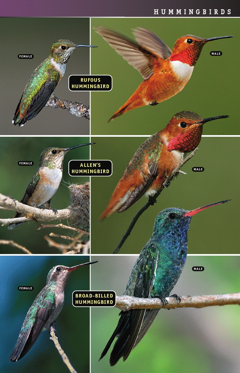 A Birders Guide To Everything Review: Birds of Easte...