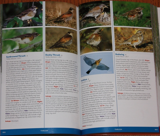Sample thrushes from Stokes Field Guide to the Birds of North America