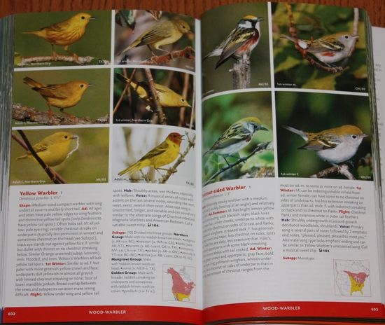 Sample warblers from Stokes Field Guide to the Birds of North America