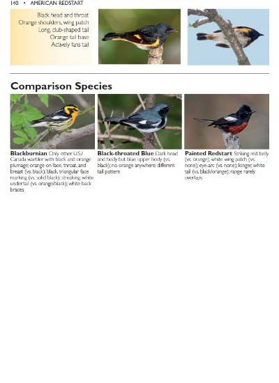 American Redstart comparison species from The Warbler Guide