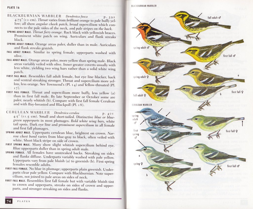 review a field guide to warblers of north america peterson guide rh birderslibrary com peterson field guide to birds of north america bird field guide peterson