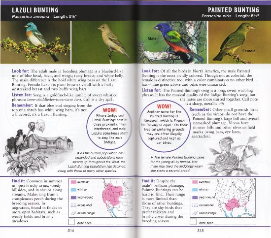 Buntings from The Young Birder's Guide to Birds of North America