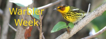 Warbler Week at The Birder's Library