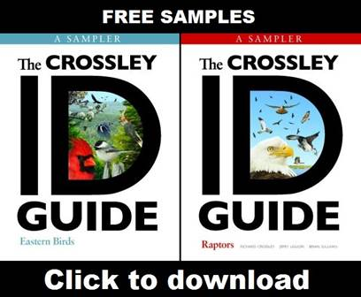 Samples of The Crossley ID Guides