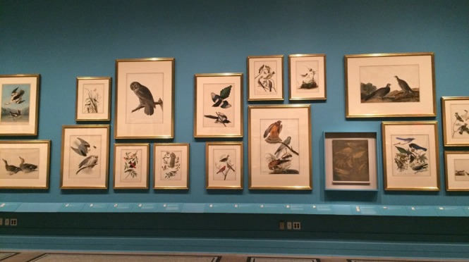 Audubon's Aviary exhibit at New-York Historical Society