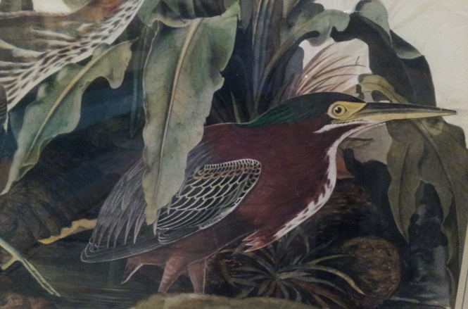 Detail from Audubon's Green Heron