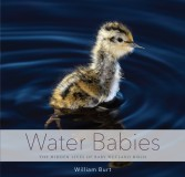 Water Babies: The Hidden Lives of Baby Wetland Birds